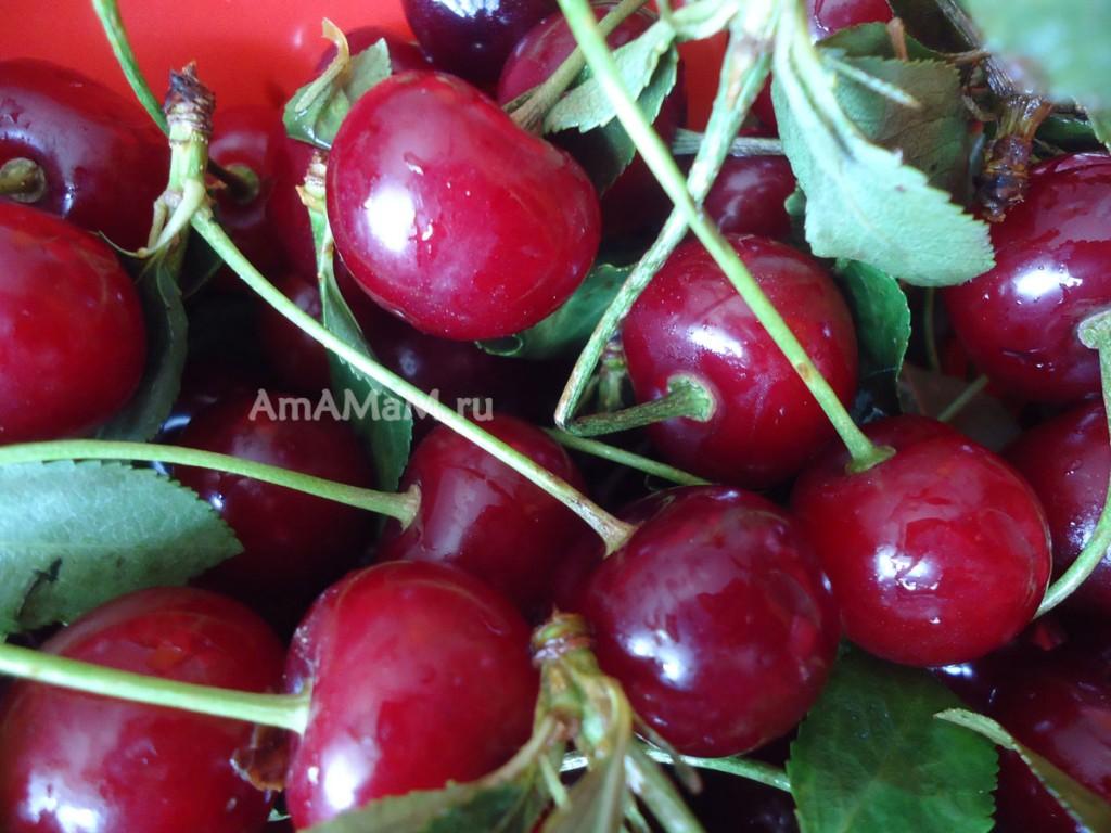 Фото вишен и рецепт варенья из вишни с косточками