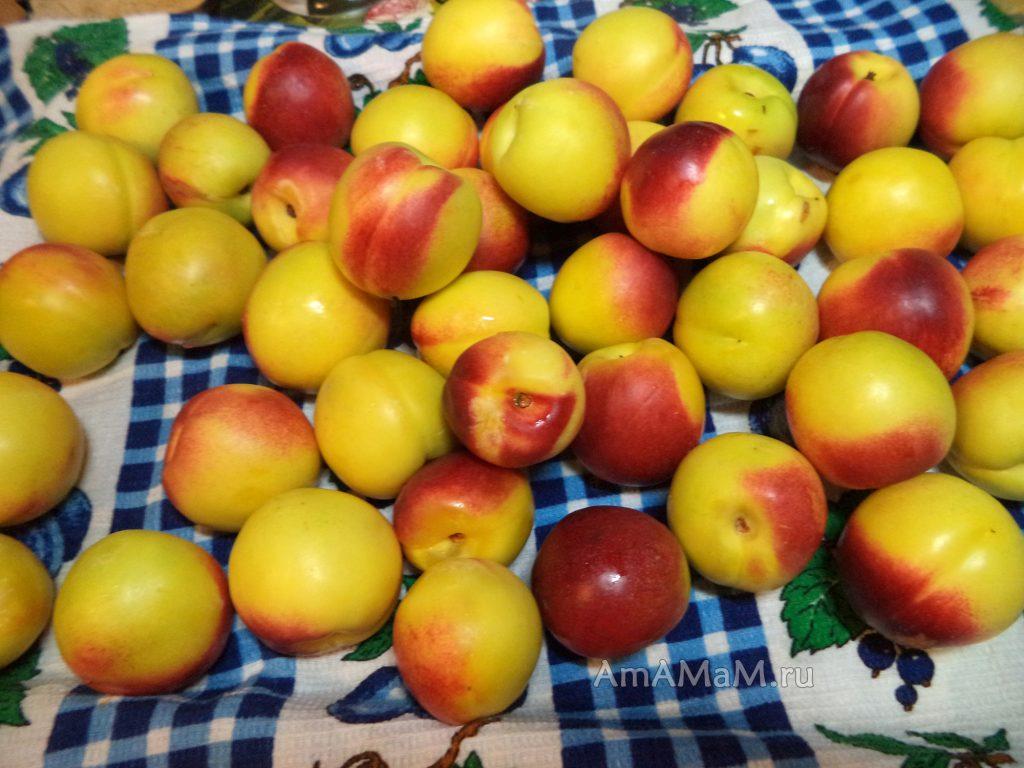 Вкусные нектарины - заготовка
