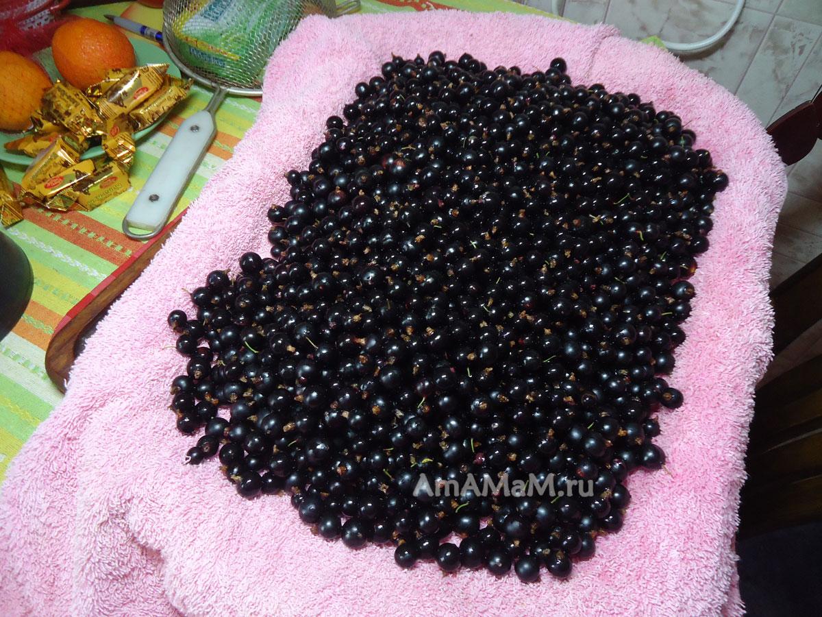 рецепты варенья желе из черной смородины