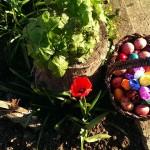 Яйца и тюльпаны