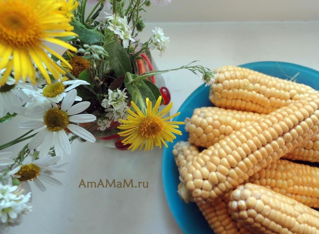 Фото молодой столовой кукурузы