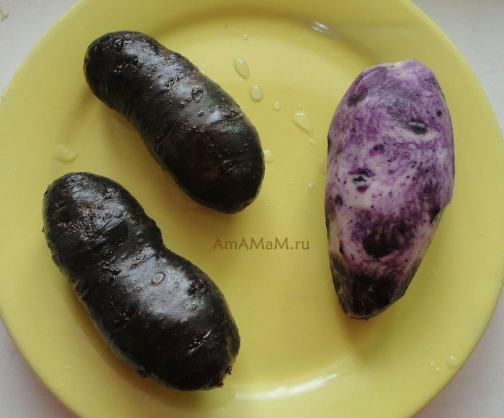 Что под шкуркой черного картофеля - фото. как выглядит фиолетовая картошка
