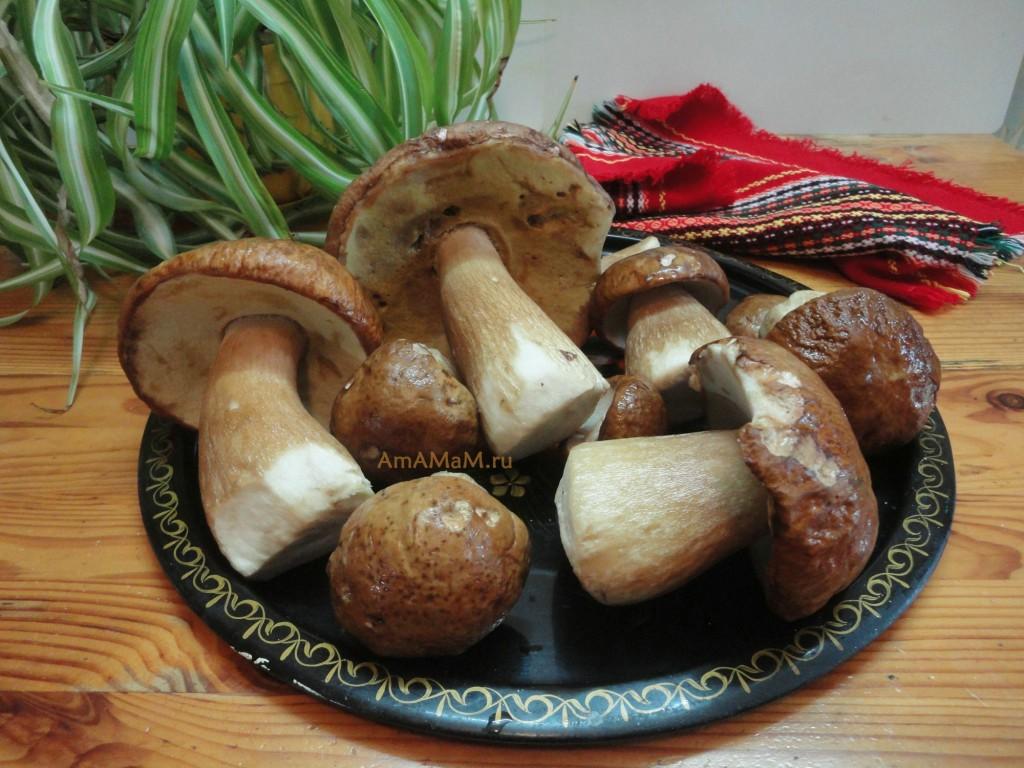 Рецепты с белыми грибами