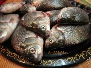 Речная рыба карась - фото