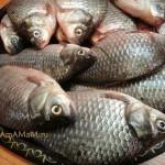 Как выглядит речная рыба карась - фото