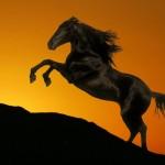 Силуэты коней - шаблоны, трафареты