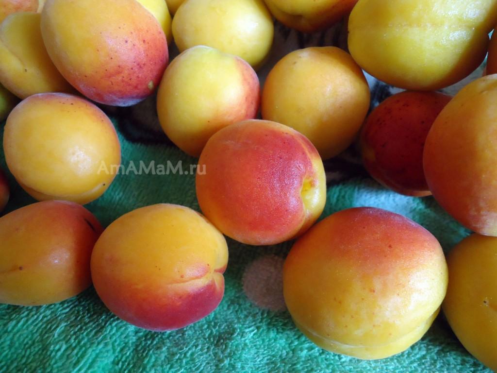 Как выглядят абрикосы - фото