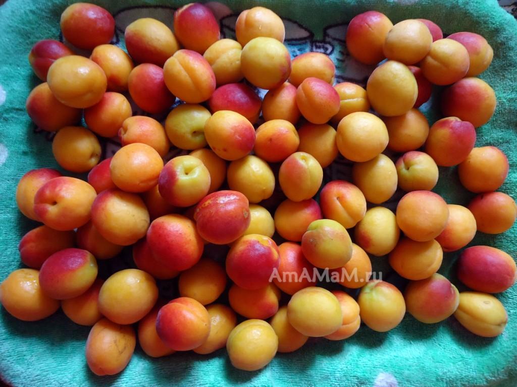 Фото абрикосов и рецепты заготовок