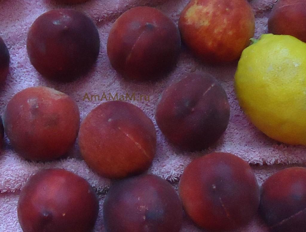 Фото персиков и лимона