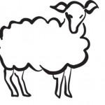 Набросок овечки - простой рисунок овцы для раскрашивания