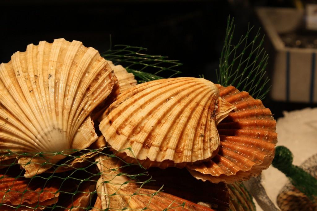 Как выглядят настоящие морские гребешки - фото красивых волнистых ракушек
