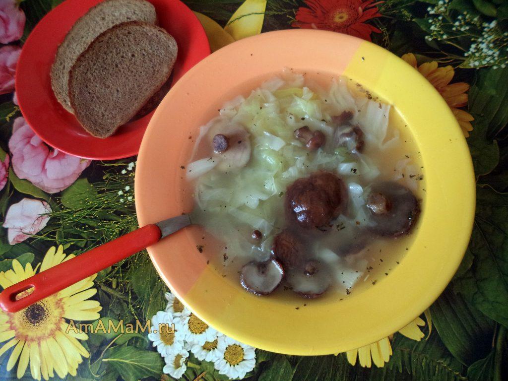 Суп из маслят - рецепт