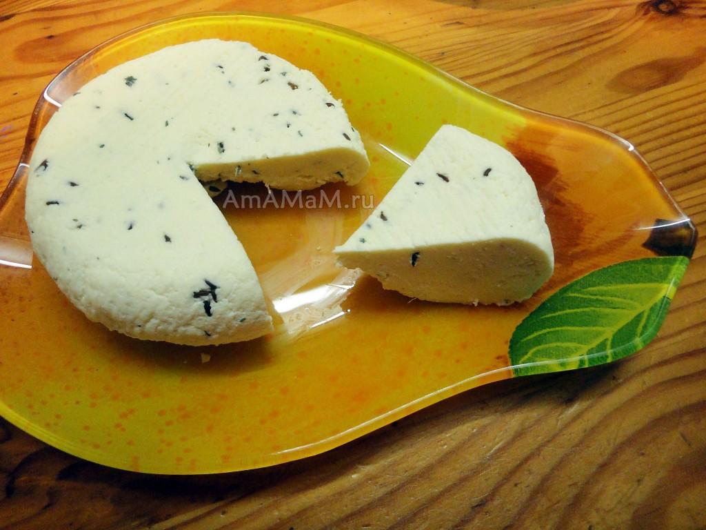 Рецепт домашнего сыра из молока