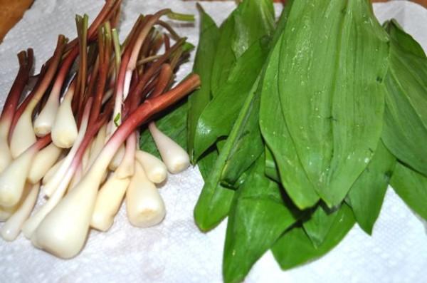 Рецепт салата из черемши