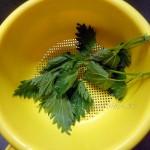 Как сделать крапиву не жгучей - ошпарить кипятком