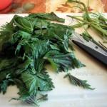 Как приготовить крапиву - способ и рецепт