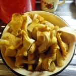 Как готовят начинку из лисичек - рецепт