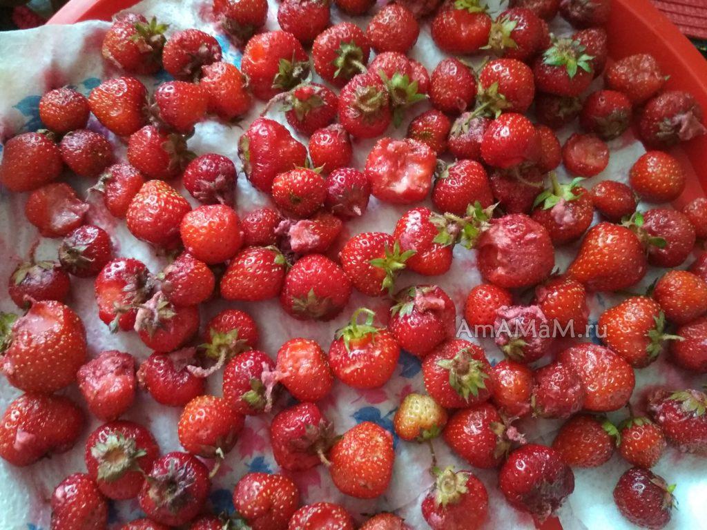 Какие ягоды идут в повидло - фото