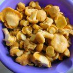 Фото грибов - лисички