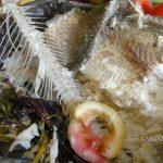 Остатки рыбы - шкура, чешуя, хребет, начинка