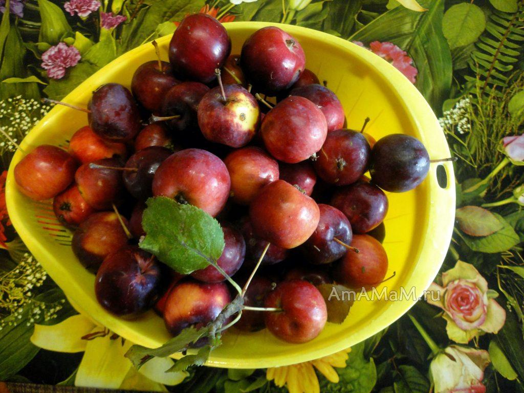 Как выглядят райские яблочки - китайка - фото
