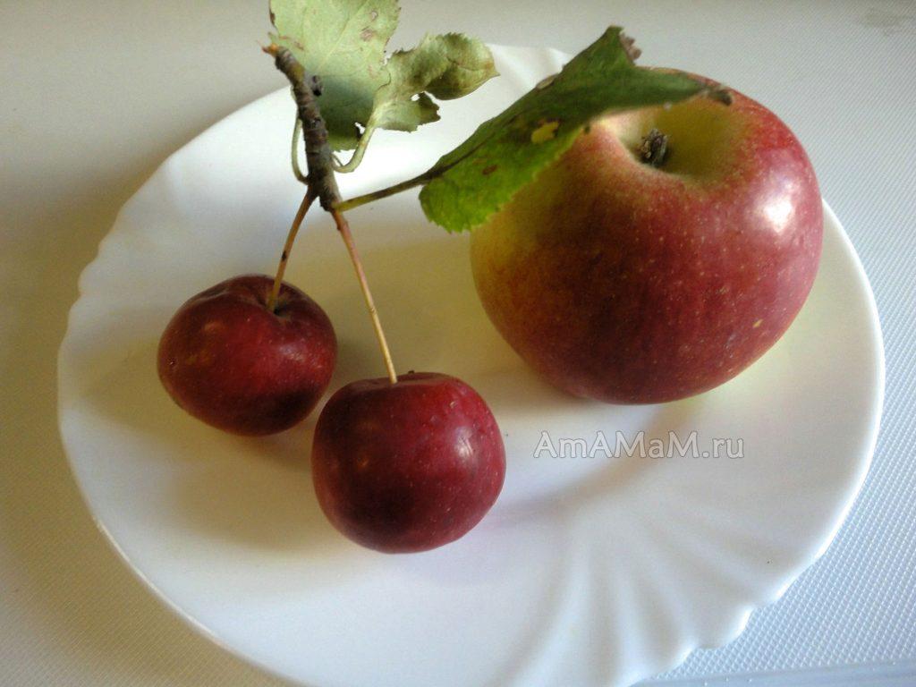 Фото китайки и обычного яблока для сравнения размера