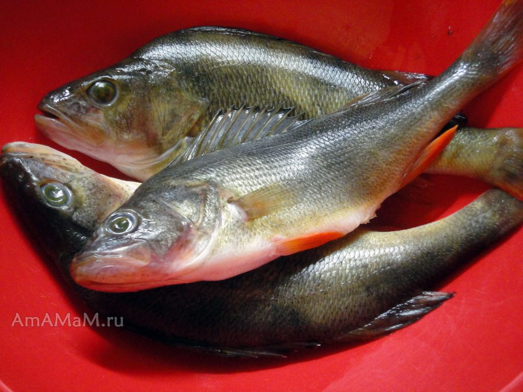 Рыба с рыбалки - речной окунь