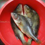 Окунь речной - как готовить, как чистить, фото и рецепт