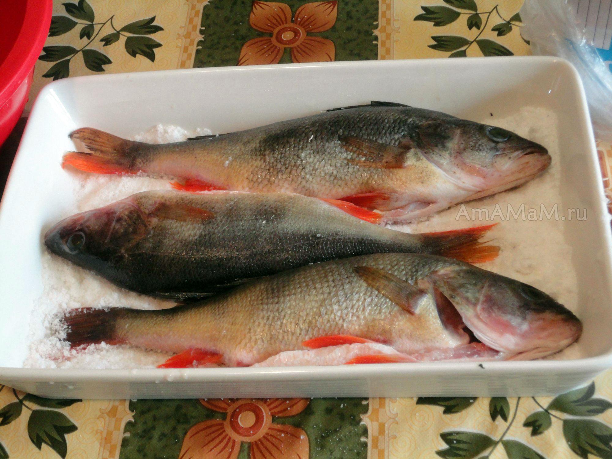 Как готовить речную рыбу в соли - рецепт