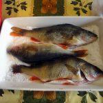 Как приготоивть речного окуня- рецепт в духовке под солью