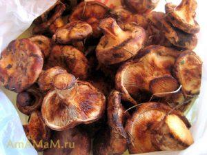 Заготовка свинухов на зиму - консервирование грибной икры