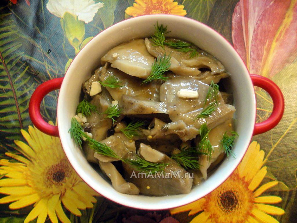 Солим белые грузди - простой рецепт с фото грибов