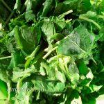 Шпинат - простые рецепты вкусных блюд