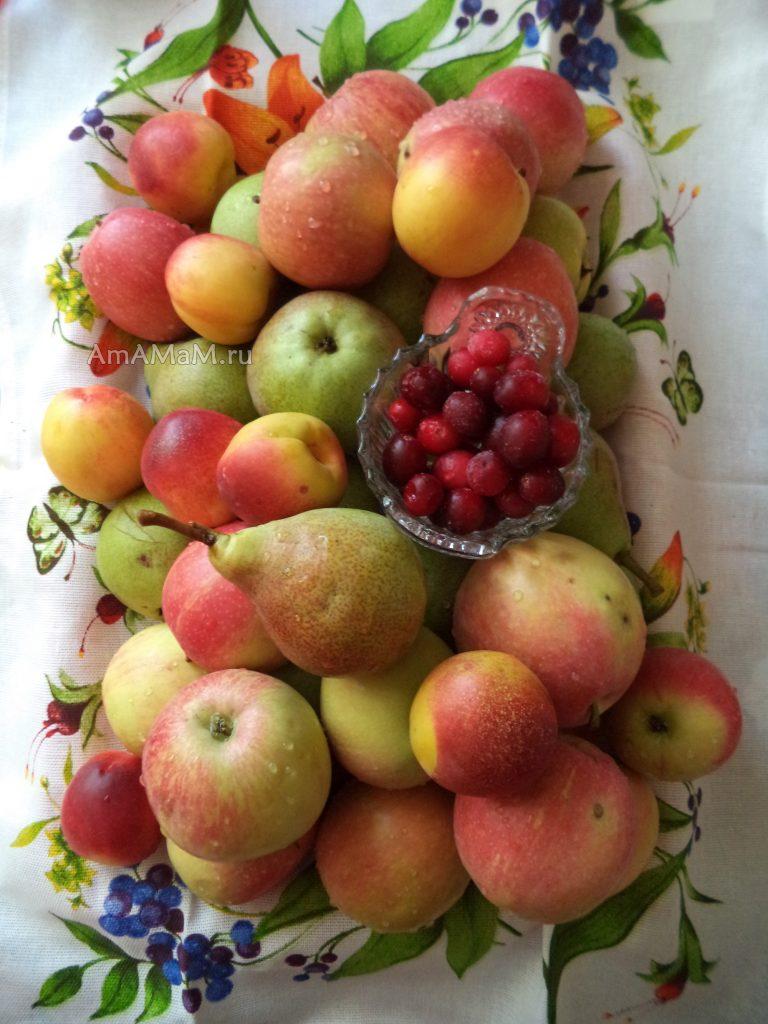 Компота-ассорти на зиму - набор фруктов и ягод