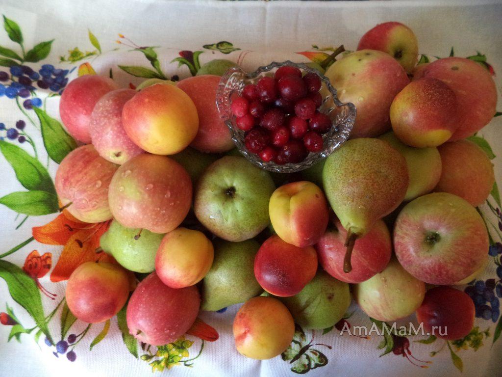 Брусничный компот с яблоками, грушками