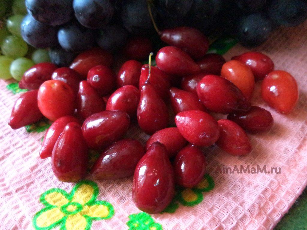 Как делать заготовки из кизила - рецепты варенья и компотов