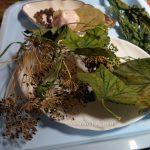 Специи и пряности для рыжиков