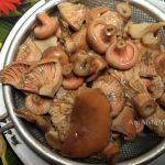 Вареные рыжики - способ приготовления маринованных грибов на зиму