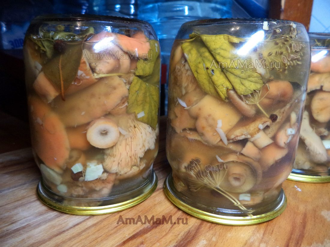 Как засолить грибы в домашних условиях вкусно рецепт