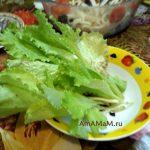 Салат листовой - фото