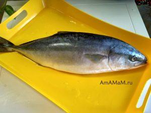 Рыбка называется лакедра