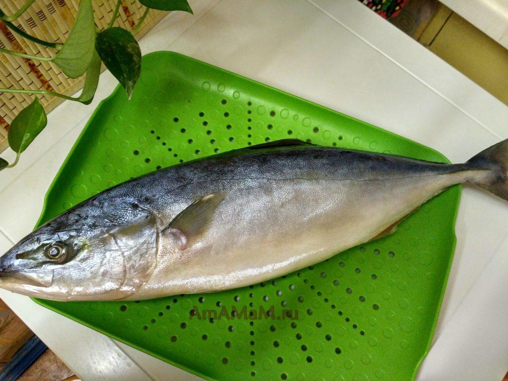Рыба лакедра