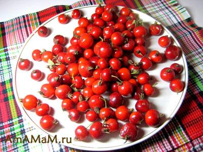 Вкусный садовый шиповник с крупными, округлыми плодами
