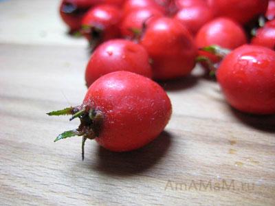 ягоды боярышника фото