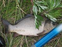 Как сохранить рыбу на рыбалке свежей