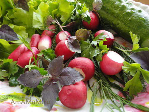 Состав продуктов для простого редисочного салата