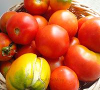 Вкусные рецепты: как сделать малосольные помидоры - простой рецепт сухого посола помидоров под гнетом